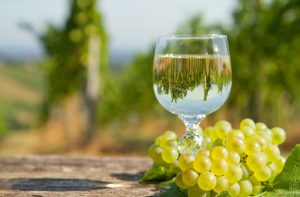 white wine and grapes in vineyard