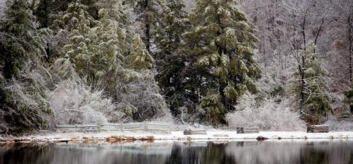 snowy trees reflecting in a lake