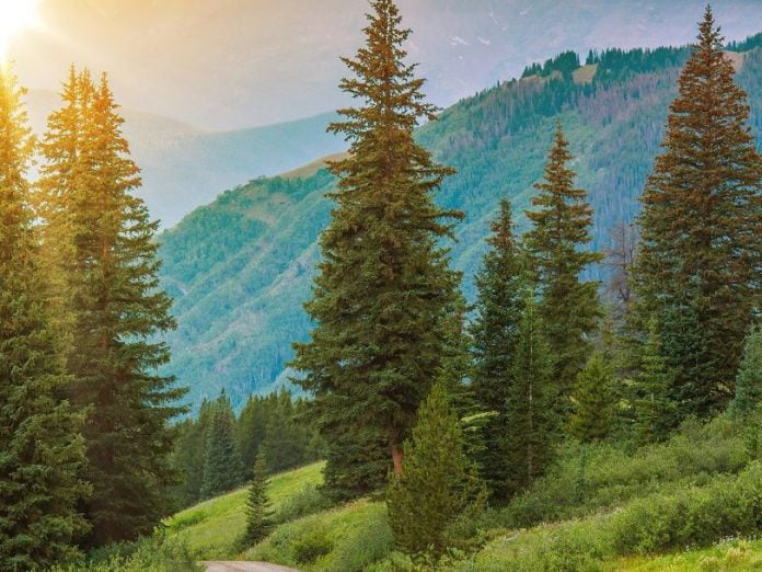 Mountain landscape with trees at sunset.
